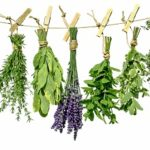 Herbs to keep you healthy throughout winter