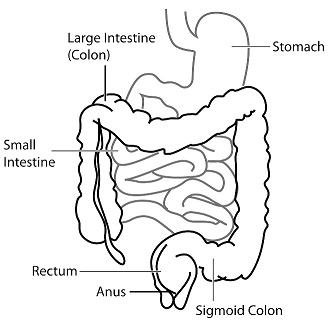 Salt water flush - illustration of colon