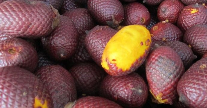Exotic aguaje fruit