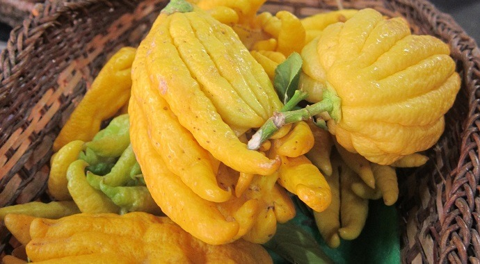 Buddha's Hand is a unique fruit
