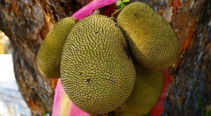 Exotic jackfruit