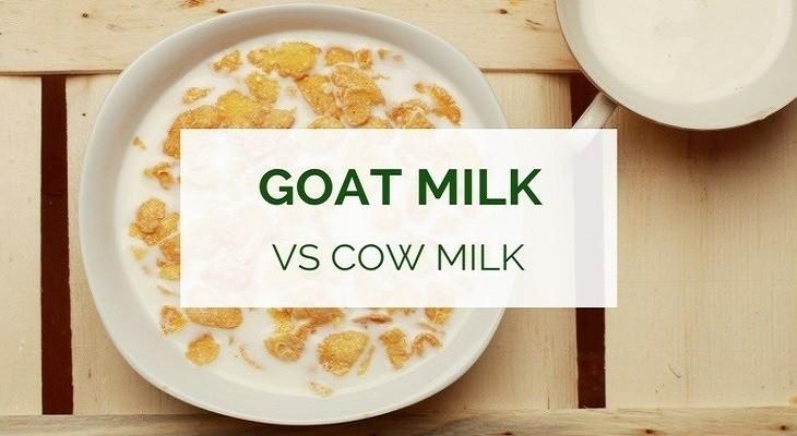 Benefits of goat milk vs cow milk