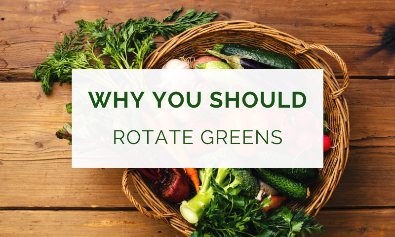 The importance of rotating greens