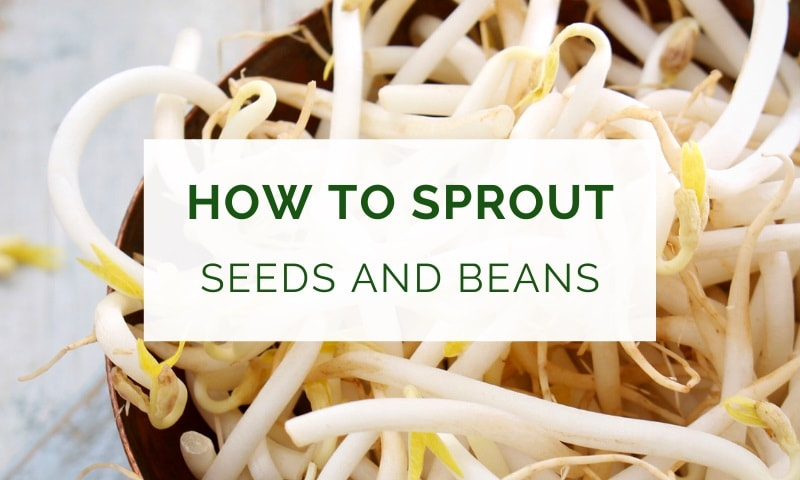 How to sprout seeds and beans