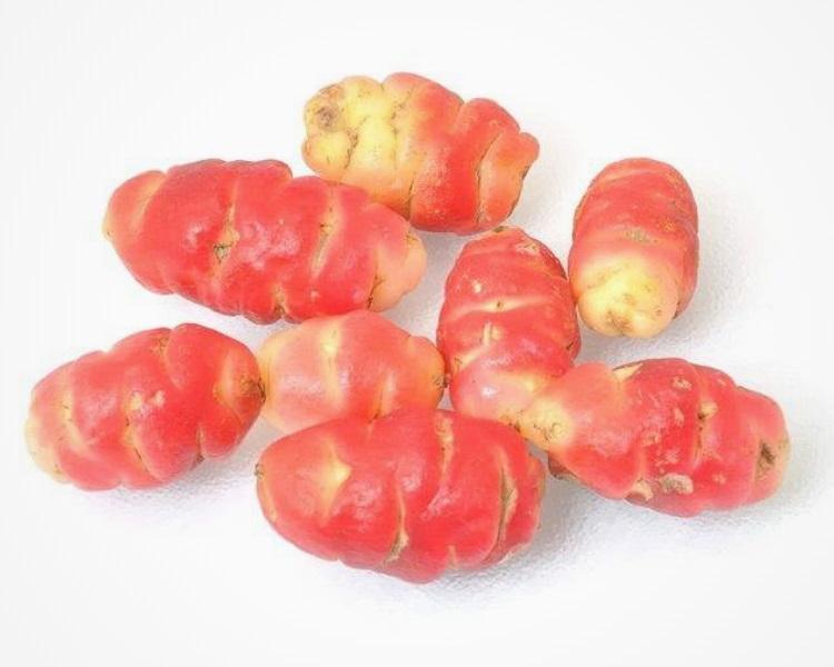 Oca root vegetable