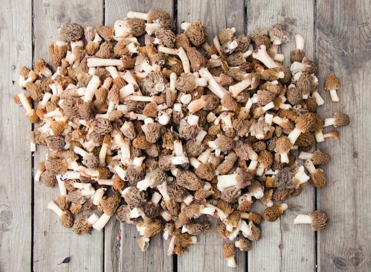 Morel mushrooms on table
