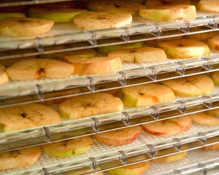 Trays in a food dehydrator
