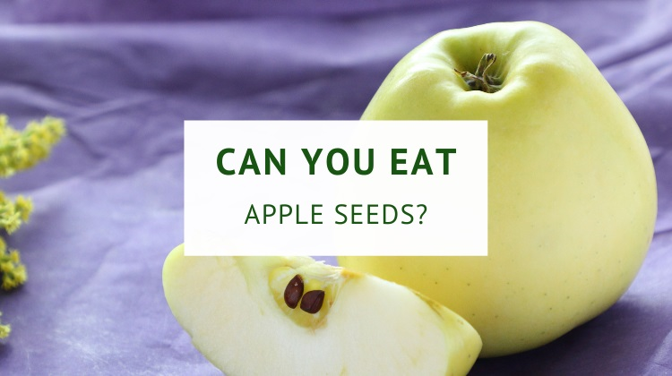 Can you eat apple seeds?