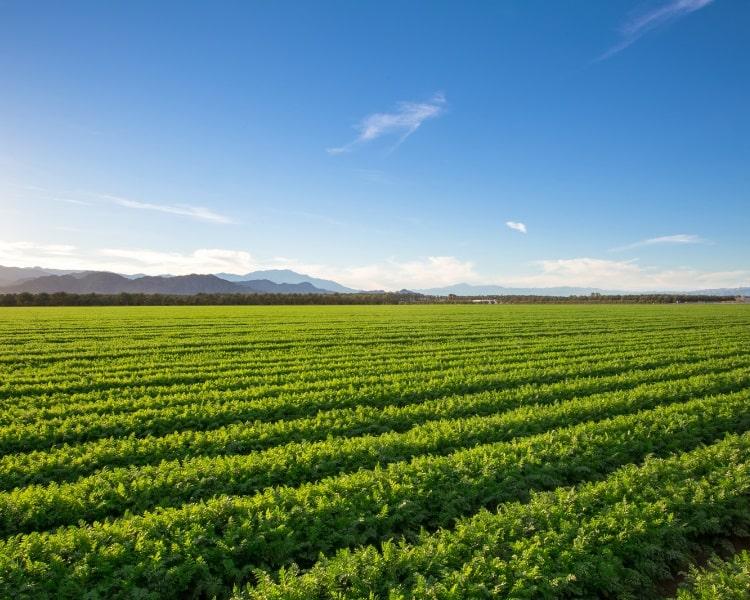 Organic crops on farm