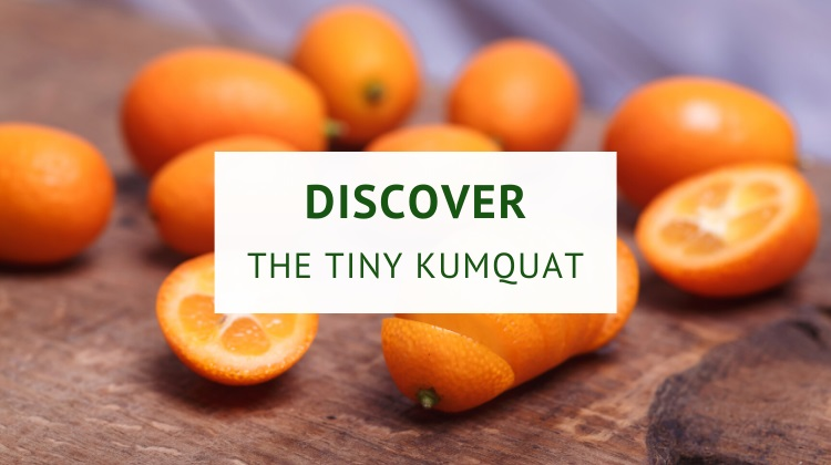 Discover the tiny kumquat (nutrition and benefits